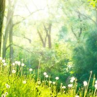 Hypnotherapy-nature-e138351047651421